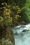 Sümela'da mayıs çiçekleri