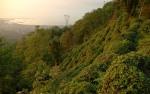 Dağmaran'da çay bahçeleri