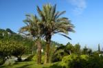Dedeman Oteli'nin bahçesi