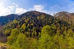 Ayder'de yeşilin tonları