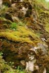 Zilkale'de kaya yosunları