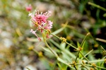Tortum Gölü'nde çiçekler