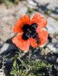 Arılar bal alınacak çiçeği bilir!..