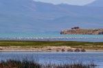 Flamingolar Van Gölü üzerinde.