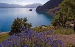 Akdamar Adası çiçekleri