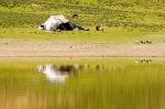 Küçük göldeki göçer çadırı
