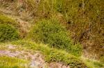 Kalderadaki bitki örtüsü