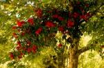 Zeynel Abidin Türbesi bahçesindeki tüm ağaçlar güllerle kaplıydı.