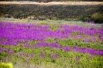Baharın renkleri..Kayseri'de yol kenarında..